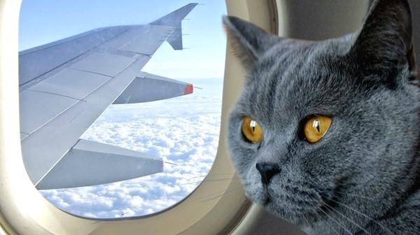 Как лететь в Монако, если вы пес или кот?